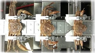 Amazing Food Processing Machines CRAB & CHICKEN Factory ★ Fast Workers Food Cutting Fastest Skills