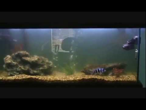 How to Clear Cloudy Aquarium Water