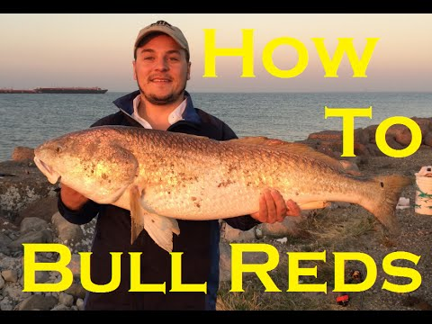 Catching Bull Redfish From Shore | Tackle & Tips