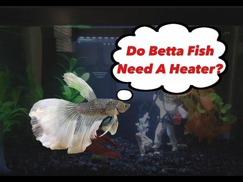 Do Betta Fish Need a Heater?