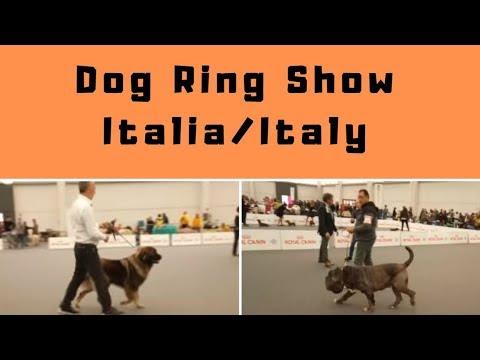 Dog Ring Show Italia/Italy - Bhola Shola