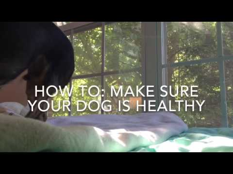 How To: Make Sure Your Dog is Healthy