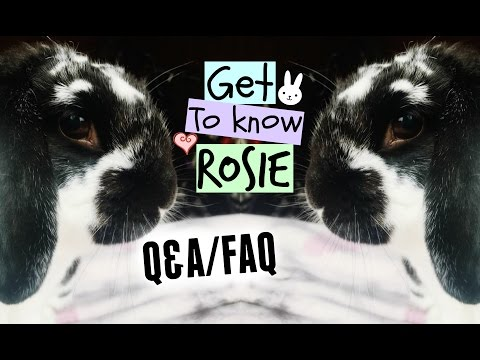 Q&A/FAQ: Get To Know Rosie! | RosieBunneh