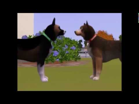 Sims 3 Pets 100 Strays Trailer