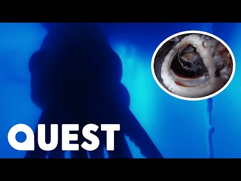 Giant Man-Eating Super Squid