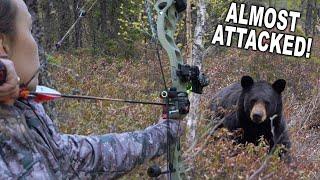 Archery Bear Kill at 7 YARDS!