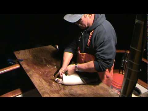 Cleaning Giant Humboldt Squid