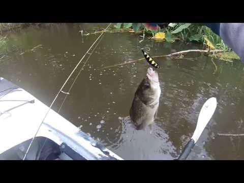 Fishing for Australian Bass on Surface Lures - Creek Bashing in Kayak