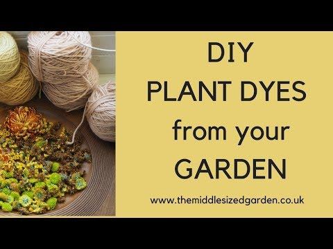DIY plant dyes from your garden!