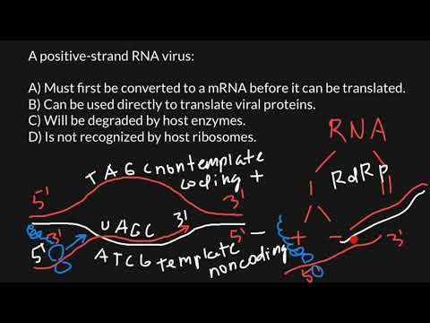 Virus Plus and Minus Strands Explained
