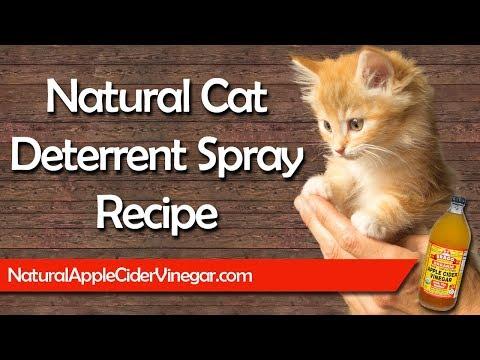 Best All Natural Cat Deterrent Spray Recipe