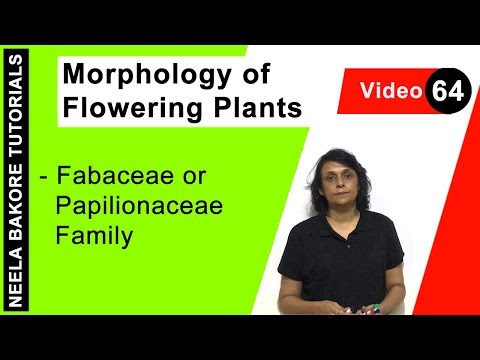 Morphology of Flowering Plants - Fabaceae or Papilionaceae Family