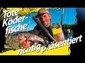 Welsangeln mit toten Köderfischen | Dead Baiting - der legale Weg zum Wels