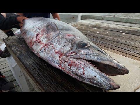 44.7lb Citation BEAST Of A King Mackerel Caught From The Pier! - King Mackerel Pier Fishing NC