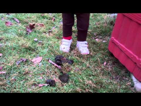 Eyja Poo on shoe and Sheep head butting