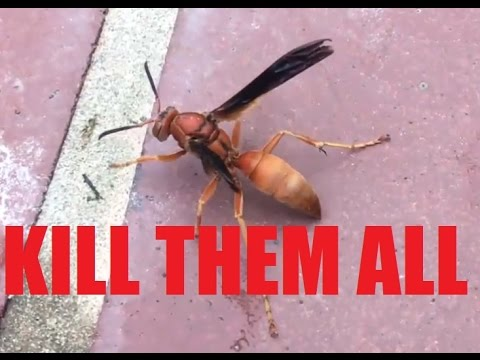 EPIC WAR: Texas Red Wasp Hornet Nest KILL Compilation! SLOW MO!