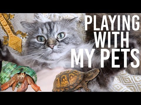 Playing With All My Pets