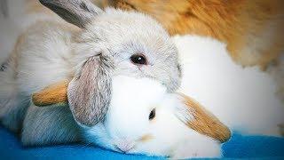 Funny Rabbits 😂 Cute Rabbits Fails (Part 2) [Funny Pets]