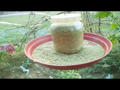 How to Make Birds Feeder From Recycled Materials || Invite Birds // Mammal Bonsai  - December 2016