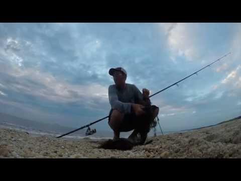 How To Catch Sharks - Dusk Shark Bite 7/15/16