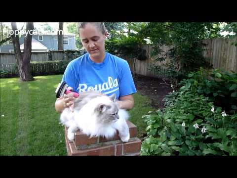 Cat Shedding Brush: Shed Ninja 2 In 1 Shedding Brush for Cats Product Review - ねこ - Floppycats