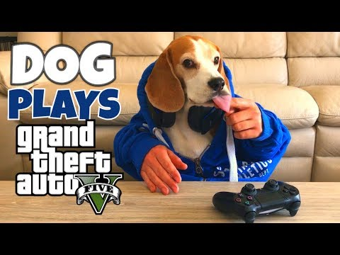Funny Dog Plays Videogames : Grand Theft Auto 5 and Battlefield 1