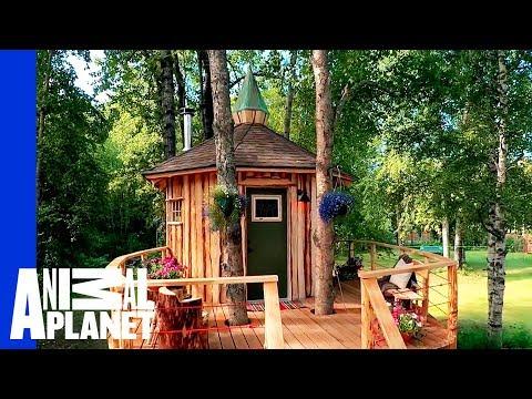 Alaskan Treetop Sauna   Treehouse Masters: Behind the Build