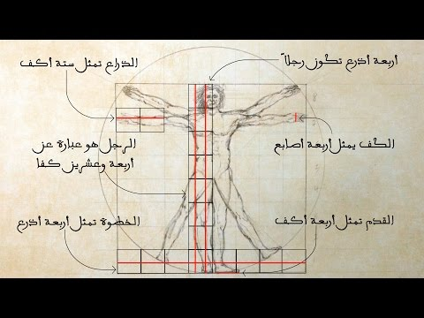 Vitruvian Man || Proportions