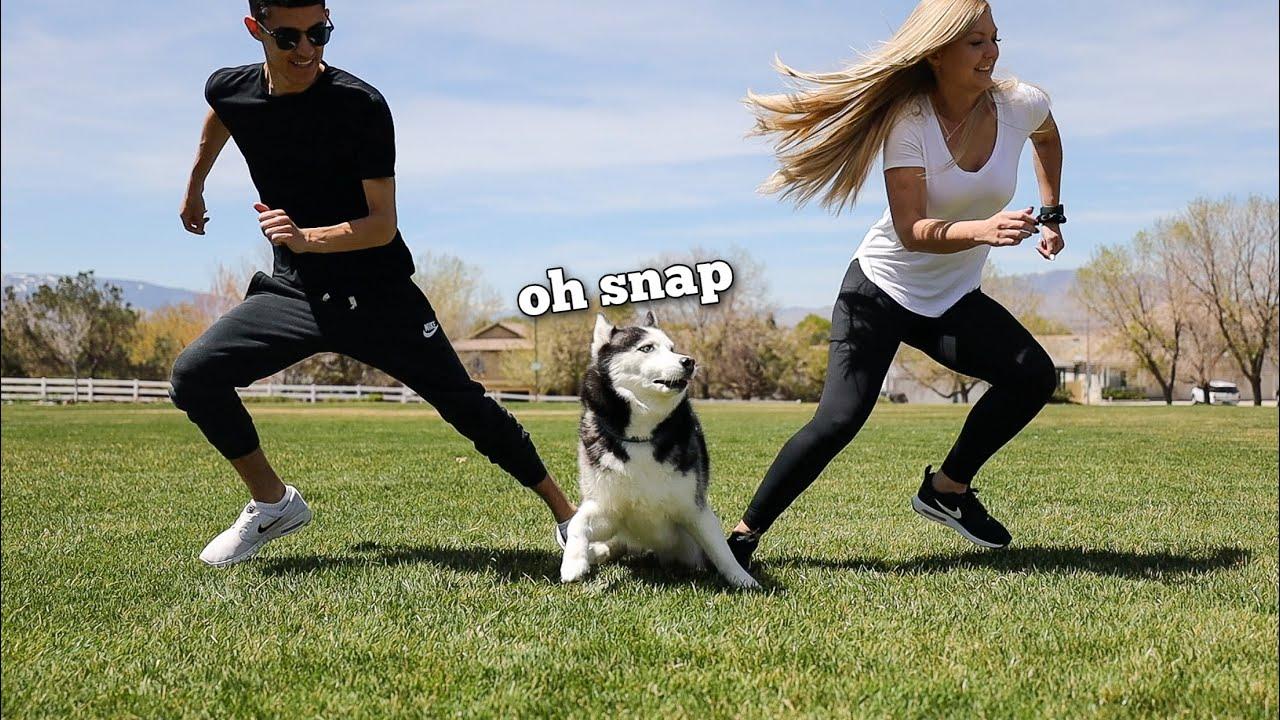Trying Funny TikTok Trends On My Huskies!