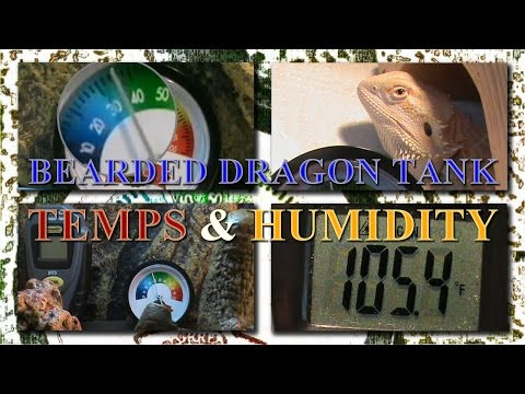Our Bearded Dragon Tank Temperatures and Humidity Levels