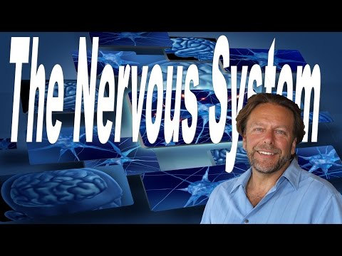 The Nervous System: The Master System