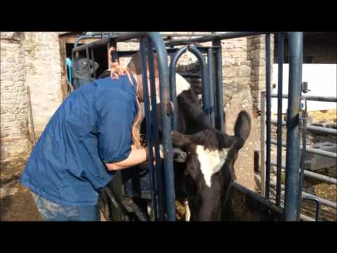 TB test fail for our herd of cattle