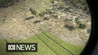 The Sulawesi quake turned rice paddies into deadly quicksand | ABC News