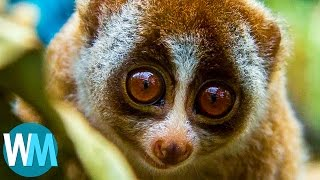 Top 10 Adorable Animals That Can Straight-Up KILL You