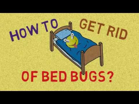 Amazing How To Get Rid Of Bed Bugs At Home Yourself Fast