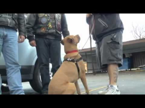 Service Dog Reunited with Disabled Veteran
