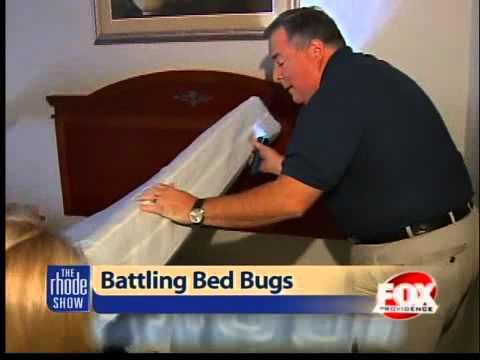 Battling bed bugs
