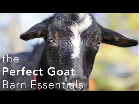 The Perfect Goat Barn Setup - what you need to make keeping goats easier!