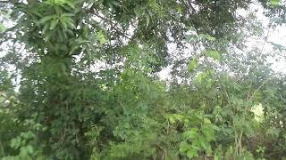 Xxxx video OUTDOOR15#COMEDY#music#india
