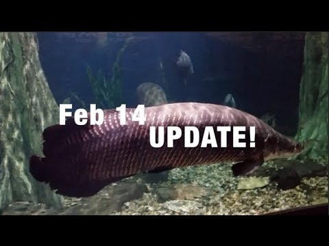 TL's Full Feb 2014 UPDATE on EVERYTHING!