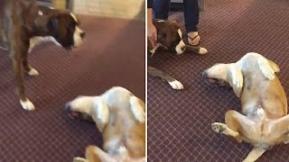 Dog Plays Dead and Scares Other Dog! | What's Trending Now