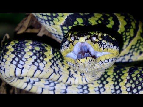 Epic Singapore Snake Adventure