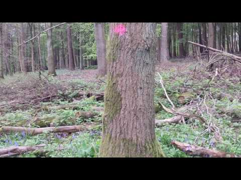 Survival Guide: How To Find Direction In A Forest Using Only Moss