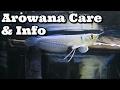 Arowana Care & Information