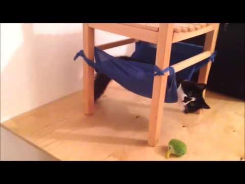 How to: DIY Cat Hammock