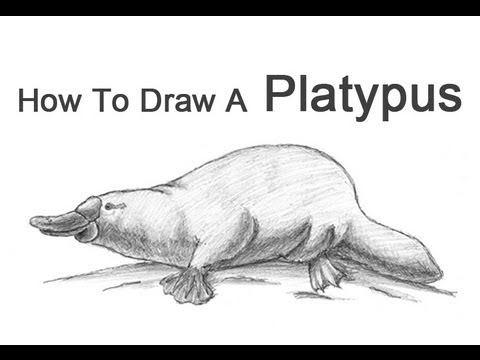 How to Draw a Platypus
