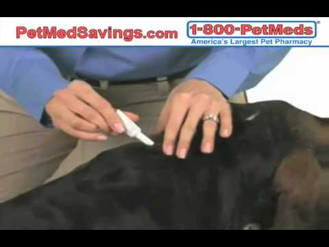 Find Medicated Flea and Tick Dog Shampoo Online Skip The Vet