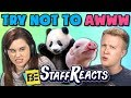 TRY NOT TO AWWW CHALLENGE #4 (ft. FBE Staff)