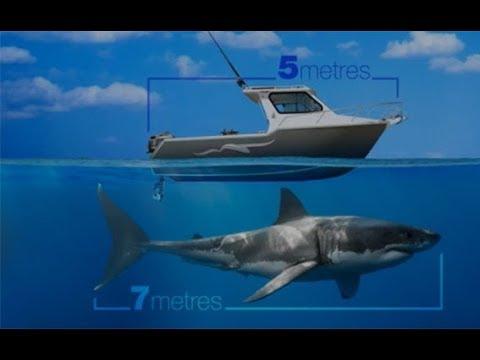 Will The Monster Great White Shark Return This Summer?
