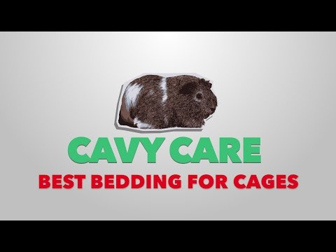 Top 5 Bedding Options for Guinea Pigs | Cavy Care